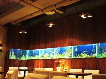 アジアのリゾートを意識した内装と水槽群